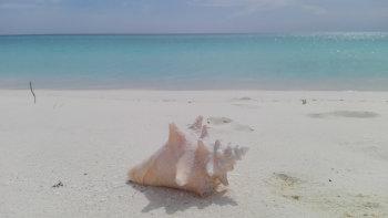Bahía de Las Aguilas République dominicaine Blog Je Suis ce que Je Suis-libre  © Catherine Pizzol