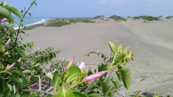 Dunas de Baní République Dominicaine Blog Je Suis ce que Je Suis-libre  © Catherine Pizzol