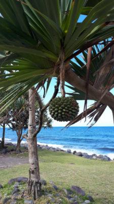 Vacoa Île de La Réunion Blog Je Suis ce que Je Suis-libre  © Catherine Pizzol