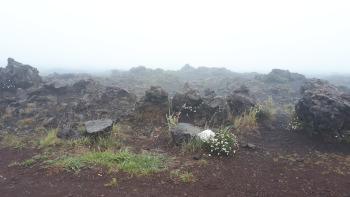 Plaine des Sables Île de La Réunion Blog Je Suis ce que Je Suis-libre  © Catherine Pizzol